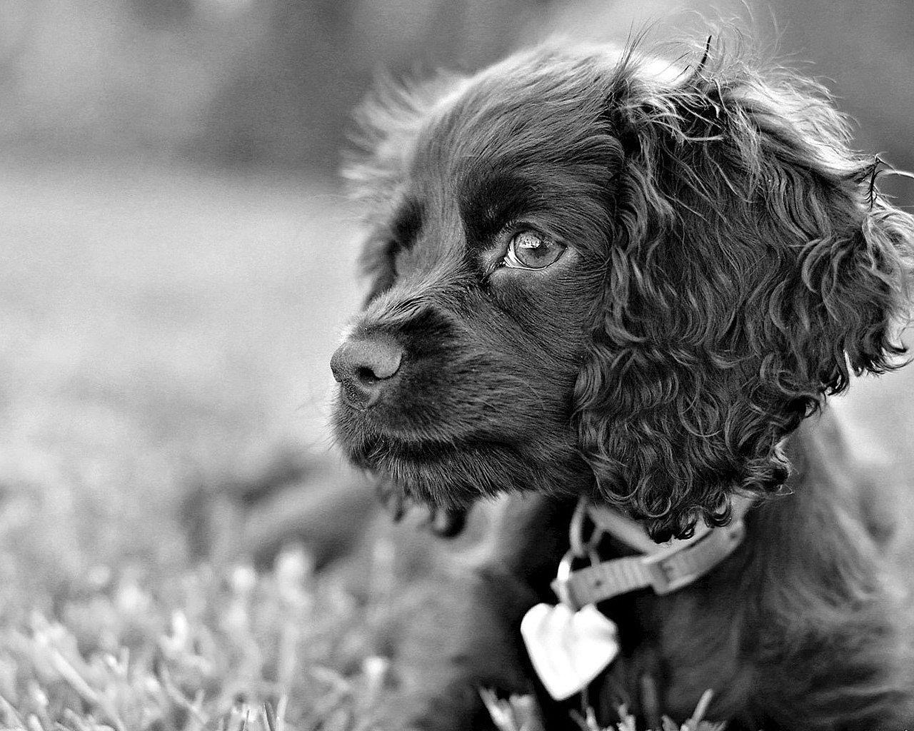 Foto in bianco e nero del cane foto di alta qualit for Foto hd bianco e nero